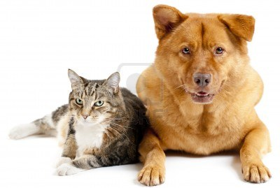 11327019-cat-and-dog-on-white-background